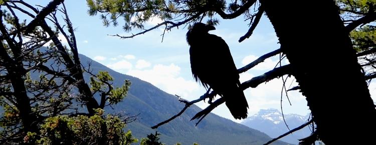 raven gift